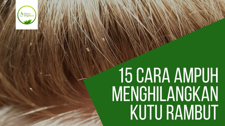 15+ Cara Menghilangkan Kutu Rambut dan Telurnya Paling Ampuh 100% Alami